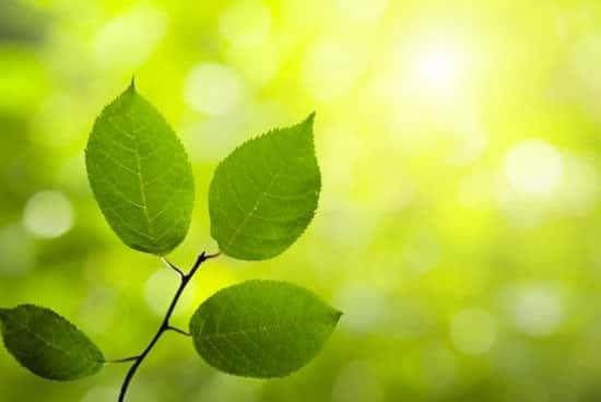A importância das plantas