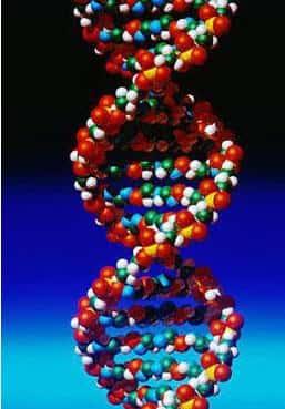 Projeto Genoma - O Código Genético