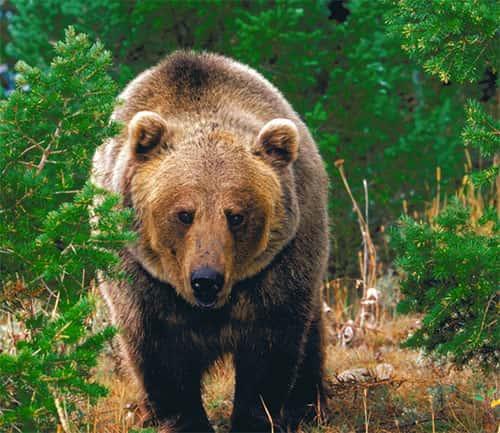 animais que vivem na floresta biologia grupo escolar