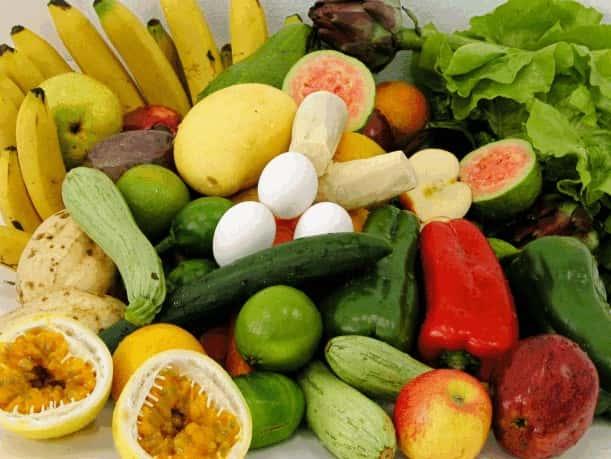 Nutrição: A Obtenção de Matéria e Energia para o Organismo