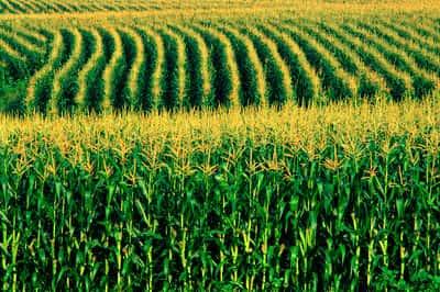Agricultura no Sul do Brasil