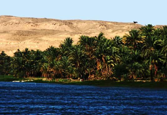 Fauna e flora das margens do rio Nilo