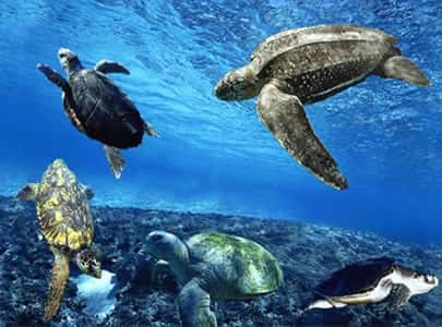 Ameaças às Tartarugas Marinhas