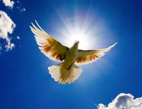 Dia Mundial da Paz - 1 de Janeiro