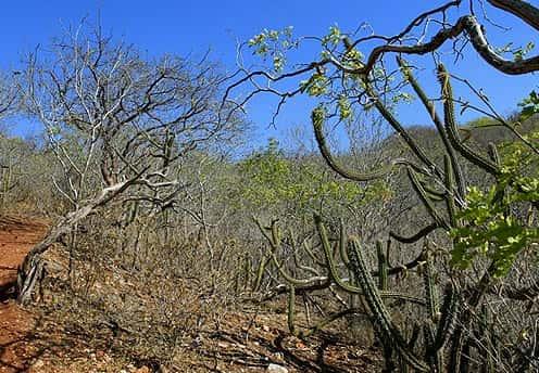 Fauna e Flora de Alagoas