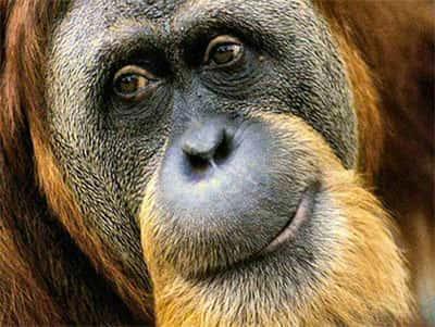 Animais diurnos - Biologia - Grupo Escolar 7d6ea8c57e
