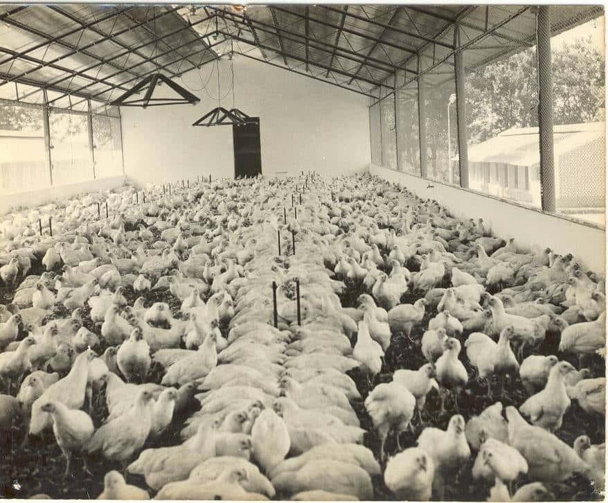 Gripe aviária põe Brasil em estado de alerta