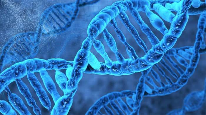 Resultado de imagem para bases da hereditariedade