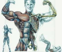 Flexibilidade - Força - Resistência Muscular