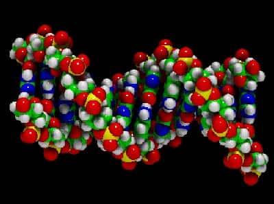 Síndrome de Deleção e Duplicação do Cromossomo