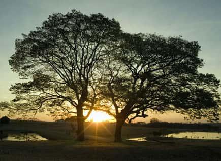 Plantas e árvores da região sudeste