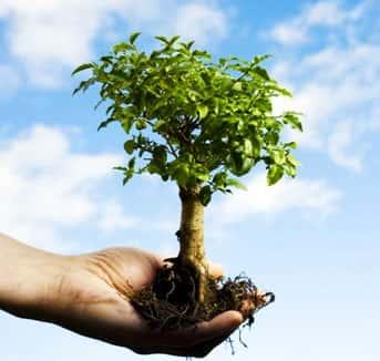 21 de Setembro, Dia da Árvore