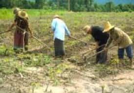 Relações de Trabalho no Espaço Rural