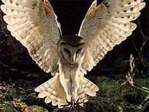 lista de animais noturnos biologia grupo escolar