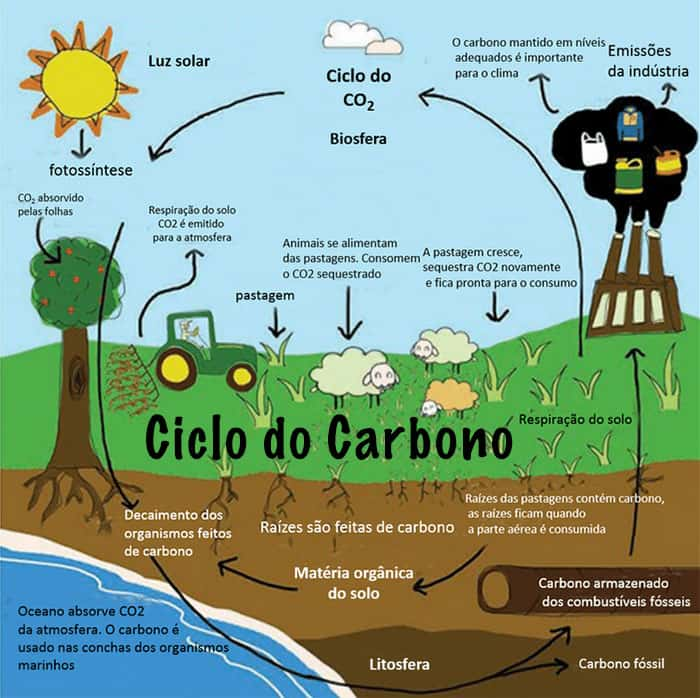 Resultado de imagem para Ciclos carbono