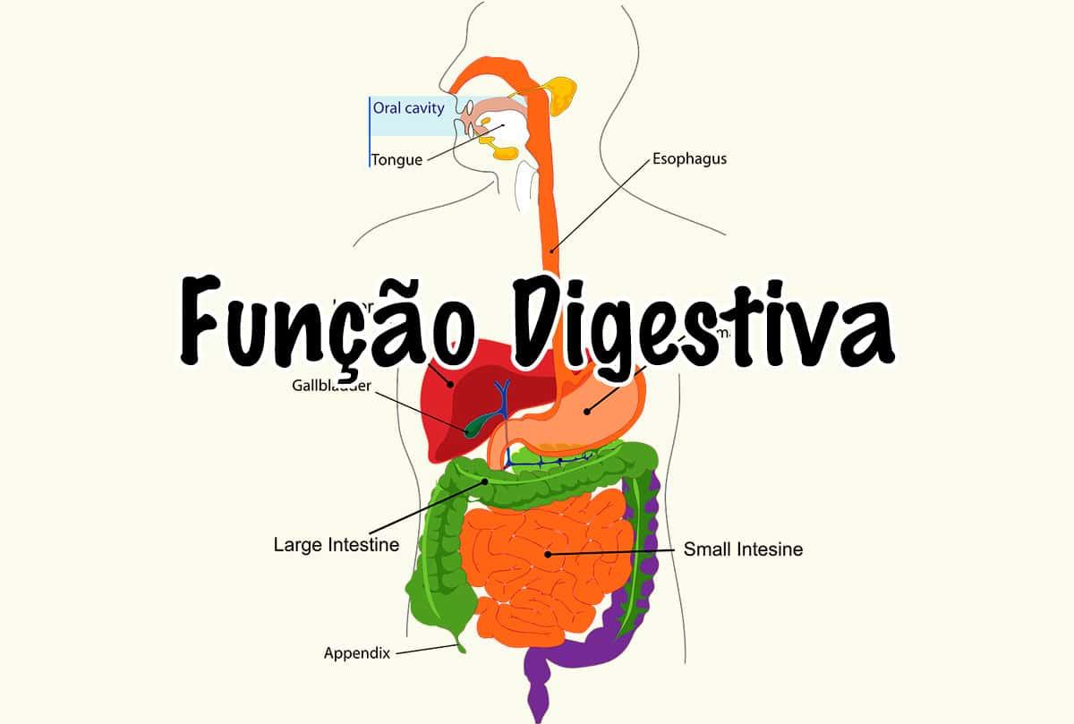 Função Digestiva do Corpo Humano