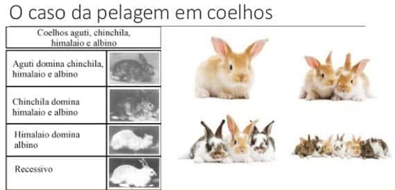 pelagem, coelhos