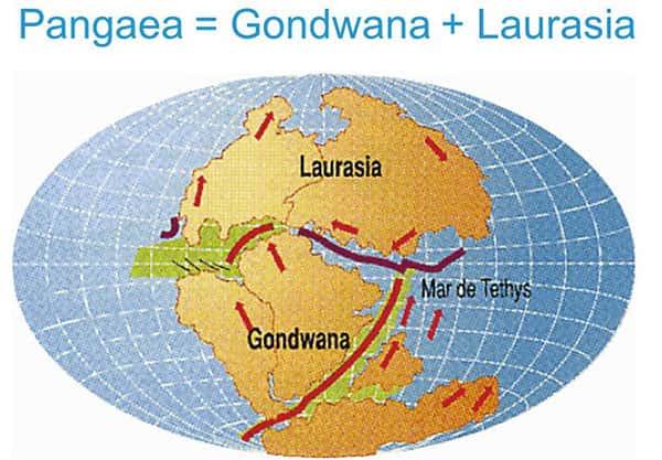 Pangeia, Laurásia e Gondwana