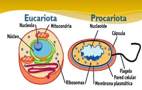 Diferença Células procariotas e eucariotas