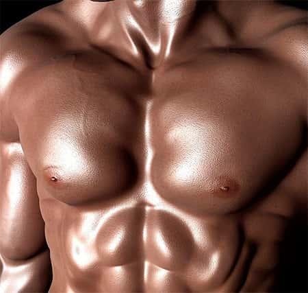 Corpo Humano Músculos