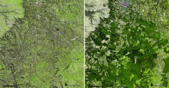 Florestas do Uruguai