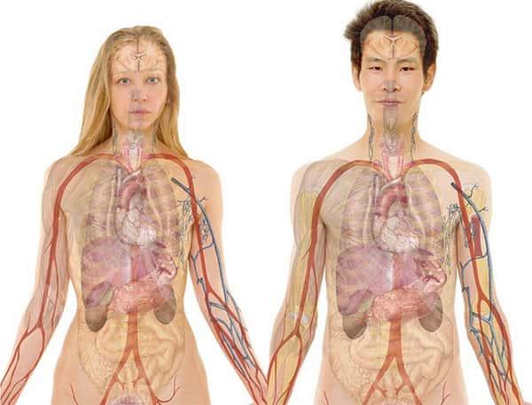 Anatomia Humana, Homem e Mulher