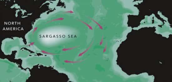 Mar dos Sargaços