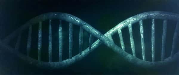 Estrutura, Microbiologia, DNA