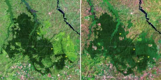 Floresta Mabira, em Uganda