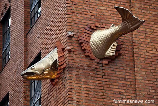 salmão na parede