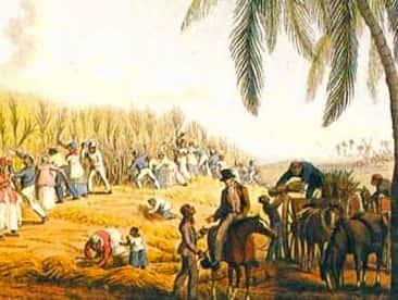 Canavial e trabalhadores