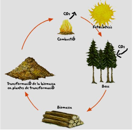 biomassa2